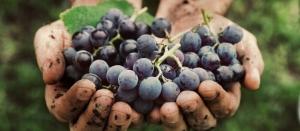 Vinhos Naturais, Orgânicos e Biodinâmicos? 1