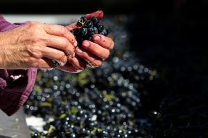 Vinhos Naturais, Orgânicos e Biodinâmicos? 2
