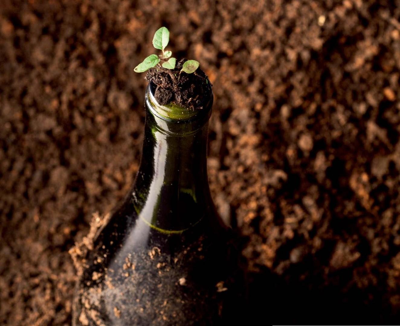 Vinhos Naturais, Orgânicos e Biodinâmicos?